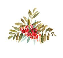 Rowan Berries, Watercolor by SolomatinaY