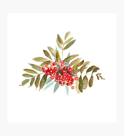 Rowan Berries, Watercolor Photographic Print