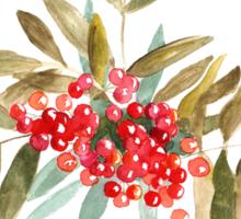 Rowan Berries, Watercolor Sticker