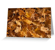 Golden Birch Leaves  Greeting Card