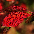 Spotted foliage  by Poete100