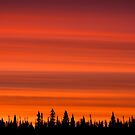 Boreal Sunrise by Marty Samis
