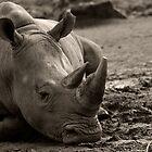 Rhino In The Mud by sanham