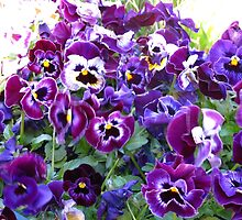 Purple Pansy Frenzy by MarianBendeth