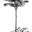 Palm Tree by monsterplanet
