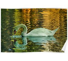 Floating on Golden Pond Poster