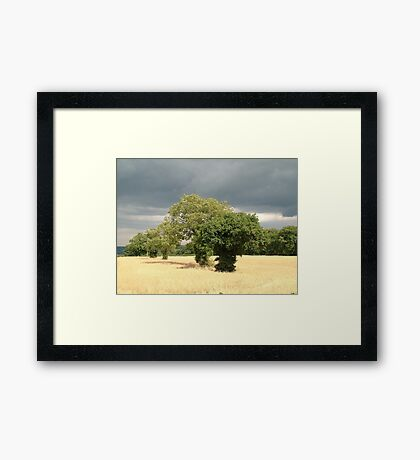 The March Of The Trees Framed Print