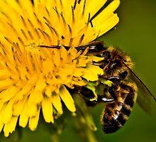 Life's Nectar by John  Kowalski