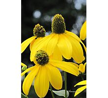 Bright Colored Wind Tossed Flowers Photographic Print
