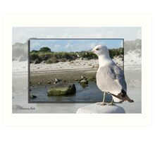 Gull on the Outside ~ Looking Back Art Print