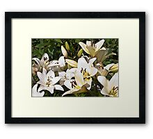 White Lilies In The Garden Framed Print