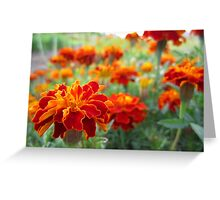 Red Marigolds Greeting Card