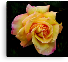 Double Hearted Peach Rose Canvas Print