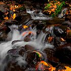 And Then There Was Colors ~ Oregon Fall Colors ~ by Charles & Patricia   Harkins ~ Picture Oregon