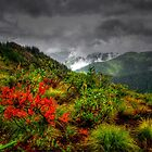 Under Controll ~ Oregon High Cascades ~ by Charles & Patricia   Harkins ~ Picture Oregon