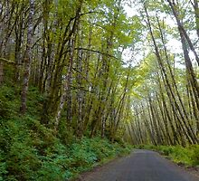 Oregon Country Drive by Charles & Patricia   Harkins ~ Picture Oregon