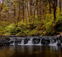 We All Fall Sometimes ~Oregon cascades ~ by Charles & Patricia   Harkins ~ Picture Oregon