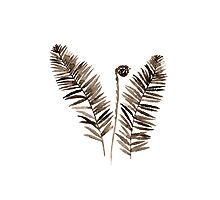 Fern Watercolor Painting Botanical Illustration Picture Image Poster Photographic Print