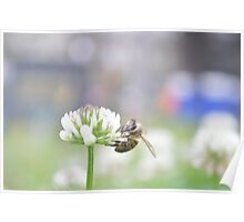 Nature - Bee on Clover Poster