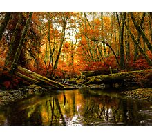 Overflow ~ Fall Colors ~ Photographic Print