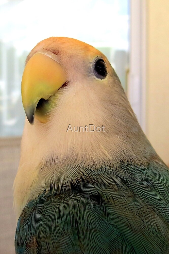 I'm a Handsome Bird! by AuntDot