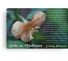 Herbs as Medicines:  Evening Primrose Canvas Print