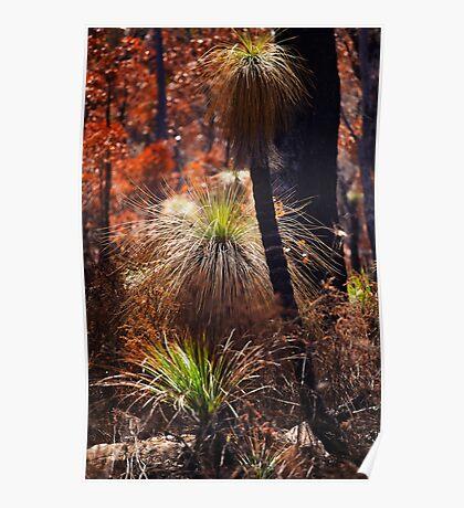 Grass Trees after a Fire Poster