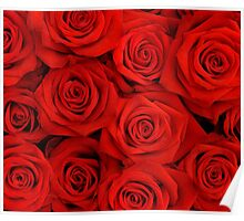 Red Spectacular Roses Poster
