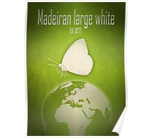 Madeiran large white butterfly - extinct animals Poster