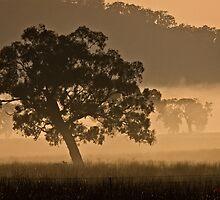 Early Morning Fog in Gungahlin/ACT/Australia (1) by Wolf Sverak