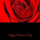 Red Rose - Valentine's Day  by RumourHasIt