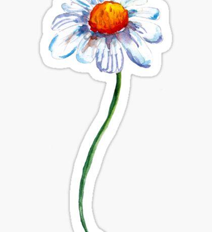 White Camomile Sticker
