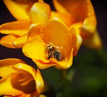 Bees love Freesias too by Clare Colins