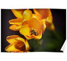 Bees love Freesias too Poster