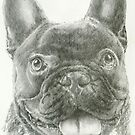 Smiling French Bulldog by BarbBarcikKeith