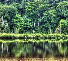 A Reflection of Trees by Ed Warick