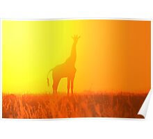 Giraffe Silhouette - Golden Colors in Nature Poster