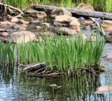Pond at Belleuve Sticker