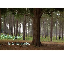 """All the forest is in an acorn"" Photographic Print"