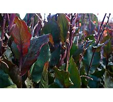 Leaves at Heligan Photographic Print