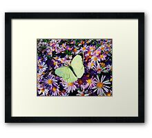 Cabbage butterfly Framed Print