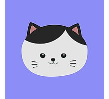 Cat with white fur and black hair Photographic Print