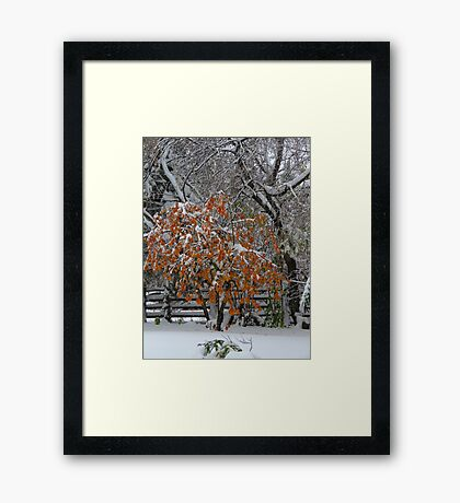 Oct Snowstorm 2016 Framed Print