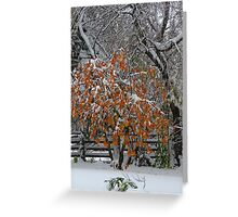 Oct Snowstorm 2016 Greeting Card
