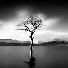 that tree again  by marshall calvert  IPA