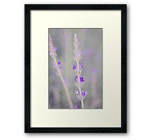 Lavender macro Framed Print