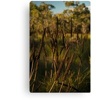 Australian Grass Trees Canvas Print