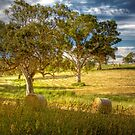 Roll in the Hay - Mount Torrens, South Australia by Mark Richards