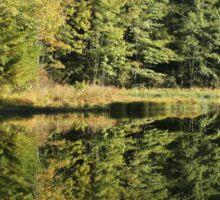 Pickerel Shoreline Reflection Sticker