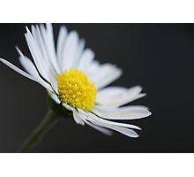 Daisy, Daisy..... Photographic Print